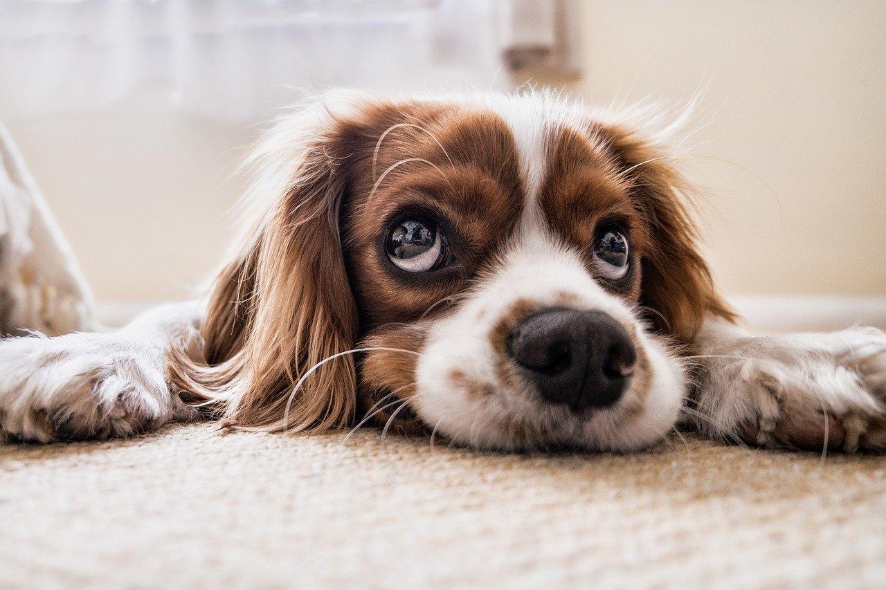 Czy warto przygarnąć psa ze schroniska?
